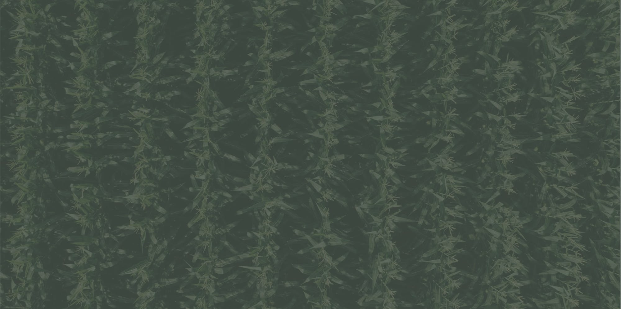 background jarallax image