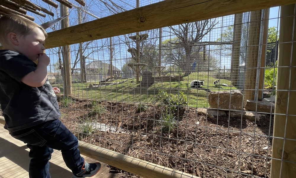 abilene zoo madagascar Gallery Images