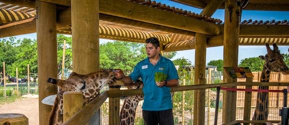 abilene-zoo-giraffe-exhibit