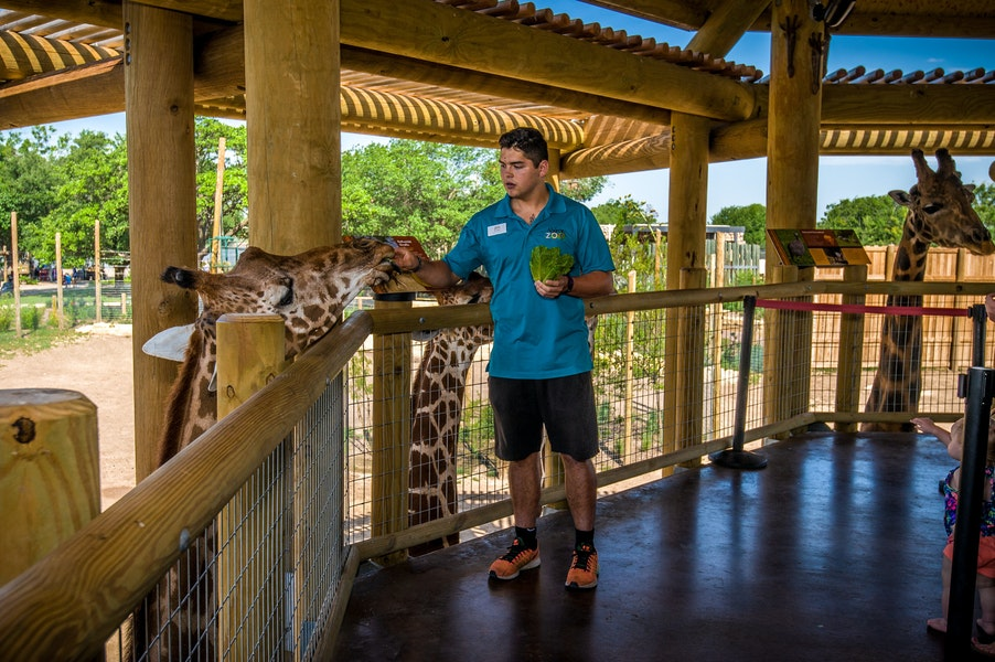 abilene zoo giraffe exhibit Gallery Images